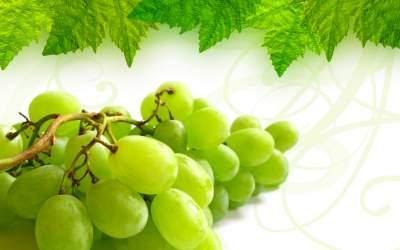 L'Uva: il frutto della gioia