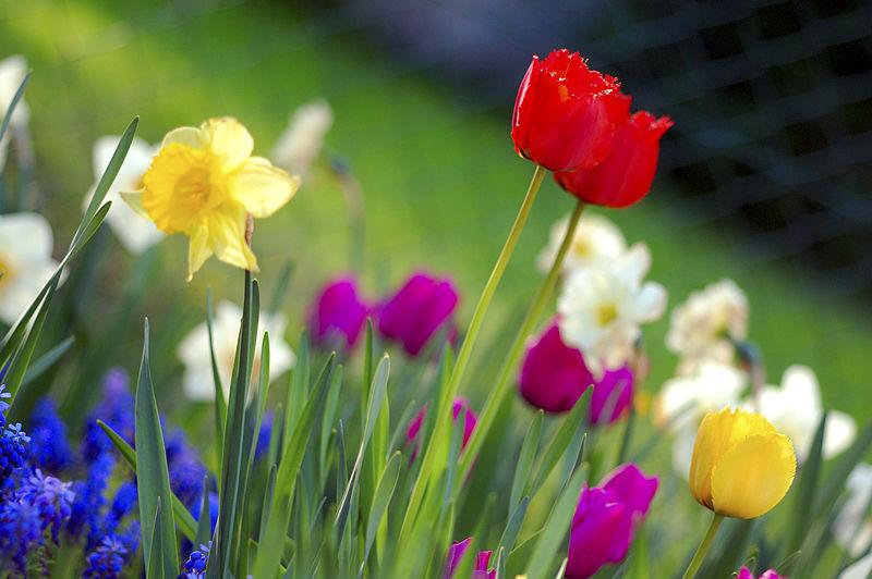 La Primavera in tasca